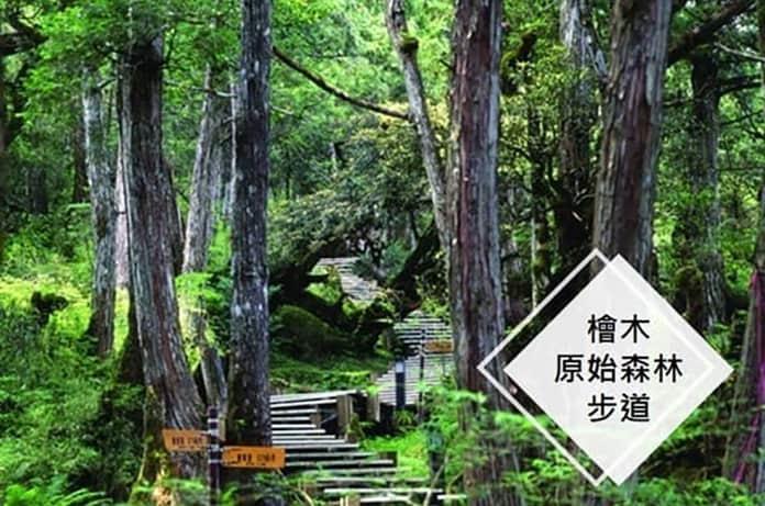檜木森林步道